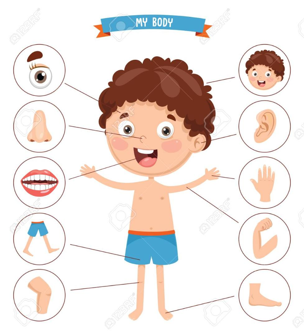 104077955-vector-illustration-of-human-body(2)
